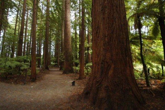 Како помоћи себи да се преживи жалост: практични савети